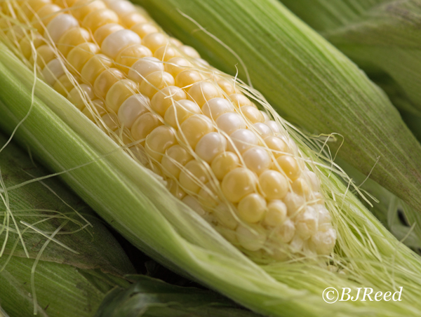 Bi-Colored Corn in Husk