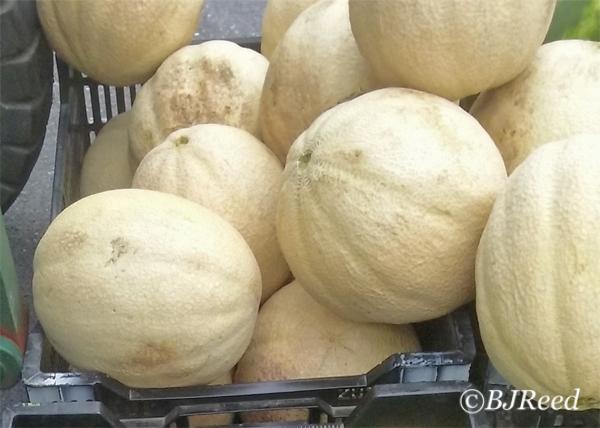 Cantaloupes at the Market